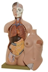 SOMSO Female Torso with Head - Removable Thoracic and Abdominal Wall