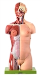 SOMSO Female Torso with Head - Opened Back - 27 Parts