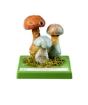 SOMSO Cortinarius Model