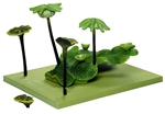 SOMSO Marchantia Polymorpha  Model Enlarged 10 Times - BoS14-3-A
