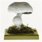 Somso Agaricus Arvensis Model