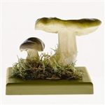 Somso Tricholoma Flavovirens Model