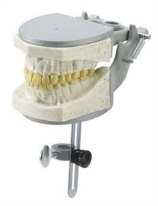 Radio-opaque X-Ray Dental Model - CD1974RAD