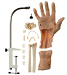 Wrist Arthroscopy Model  | Arthroscopic Model of the Wrist