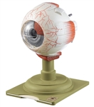 SOMSO Eyeball Model, 4x Enlarged - CS5