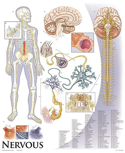 Human Anatomy and Physiology Chart Series Set on Tripod