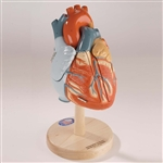 Giant Heart of America (0140-00) - DGA40