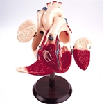 Heart of America 2x Life-size (0821-40) - DGU81