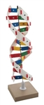 DNA Model Kit, Rotatable on a Base - EAZM0058