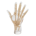 X-Ray Phantom Hand, transparent