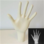 X-Ray Phantom Hand, opaque - EZ7215