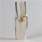 X-Ray Phantom Elbow, Transparent