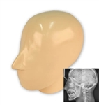 X-Ray Phantom Head With Cervical Vertebrae, Opaque - EZ7310