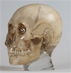 X-Ray Phantom Head, Transparent - EZ7320