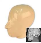 X-Ray Phantom Head, Opaque