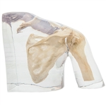 x-ray phantom shoulder transparent