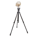 Tripod for X-Ray Phantom Head