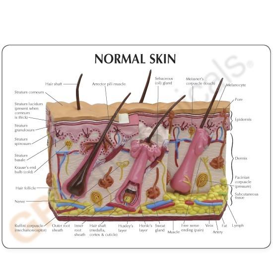 Skin Normalacne New Gp3751