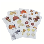 Anatomy Education Cards - GP810