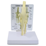 Canine Knee Model - GP9050