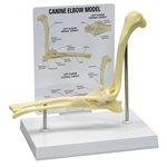 Canine Elbow Model GP9070