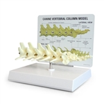 Canine Vertebral Column Model