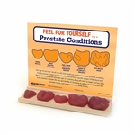 Feel For Yourself: Prostate Conditions Display