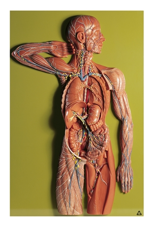 SOMSO Lymphatic System