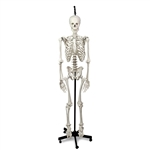 Hanging Skeleton with Natural Human Casting LA00174U