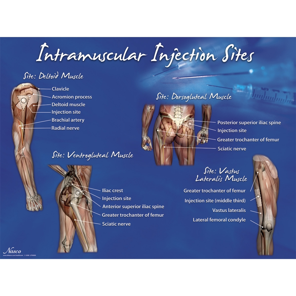 New Nasco Im Intramuscular Injection Sites Set