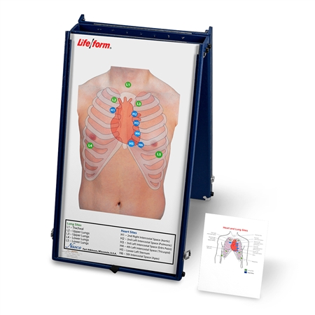 Anterior Auscultation Practice Board with Case Only - LF01190U