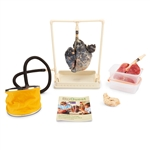 BioQuest Inflatable Lungs Comparison Kit (Single Display) LS03768U