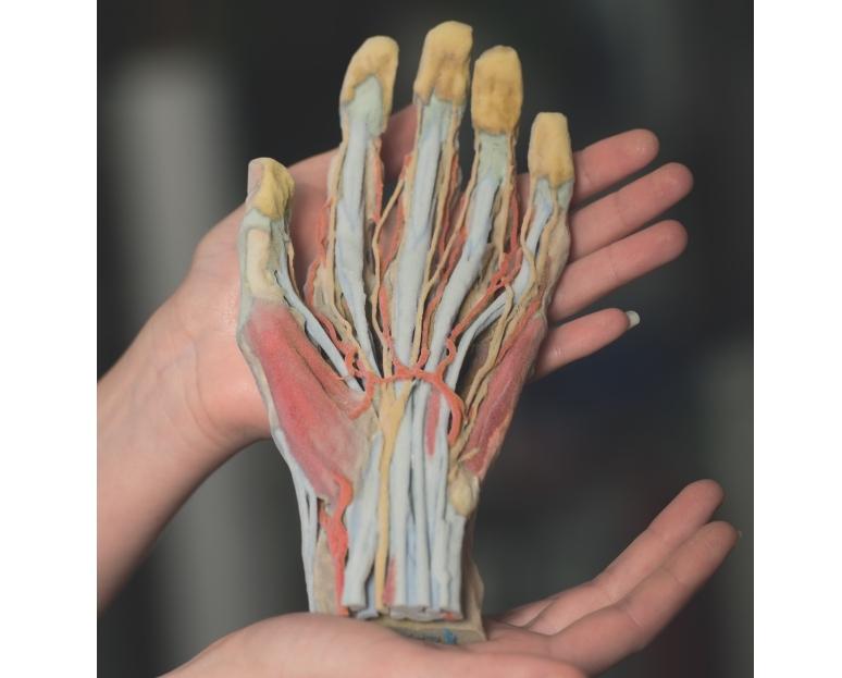 3d Printed Hand Model