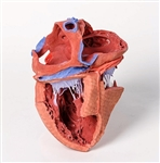 3D Printed  Heart internal structures Replica | 3D Printed  Heart internal structures Model
