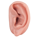 Acupuncture Ear Model, Left N15-1L