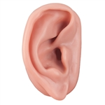 Acupuncture Ear Model , Right N15-1R