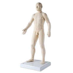 Acupuncture Model, Male - N30