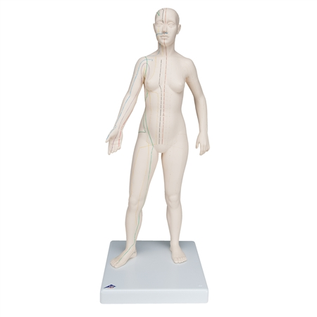 Acupuncture Model, female