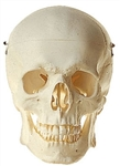 SOMSO Skull (Without suspension hole)