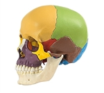 SOMSO 14-Piece Model of the Human Skull - QS8-3