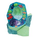 Plant cell model, magnified 10,000:1 - R05