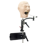 Adult X-Ray Dental Manikin - SB23463U