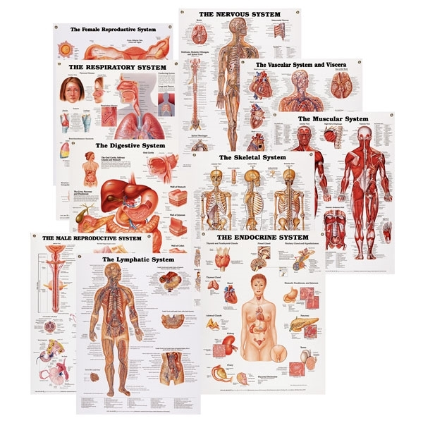 Peter Bachin Anatomical Systems Chart Set of 10 SB25037U
