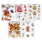 Peter Bachin Anatomical Organs/Structures Chart Set of 5 SB25038U