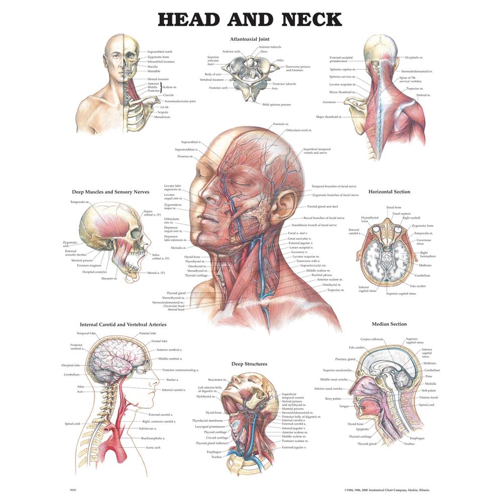 Peter Bachin Anatomical Organsstructures Chart Set Of 5