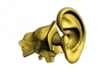Adult Ear Phantom