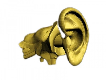 Adult Ear Phantom for Research and Development - TPS-ER-A01