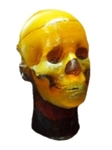 Customized Adult Head Phantom for Multipurpose Imaging Applications