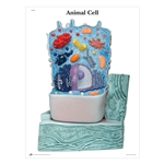 The Animal Cell STICKYchart® - V1R04S
