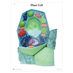 The Plant Cell STICKYchart® - V1R05S